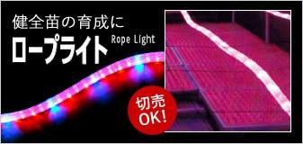 ロープライト