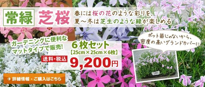 春には桜の花のような彩りを、夏〜冬は芝生のような緑が楽しめる