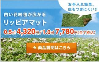白い花絨毯が広がるあわじ花マット