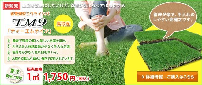 省管理型高麗芝・TM9(ティーエムナイン)