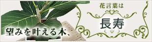 望みを叶える木、花言葉は「長寿」
