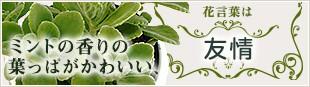 ミントの香りの葉っぱがかわいい、花言葉は「友情」