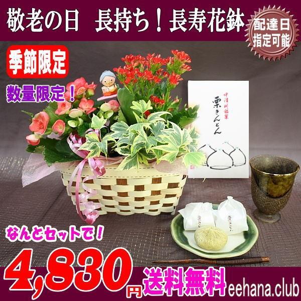 栗きんとん&長寿花鉢4,480円「送料無料」
