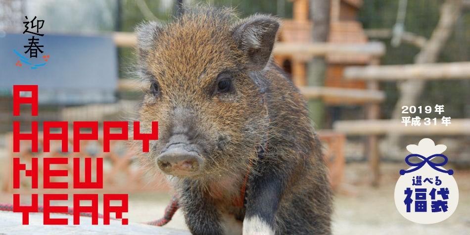 猪年お年玉