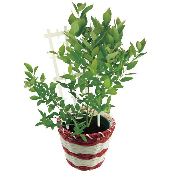 【送料無料】【母の日】花のギフト社 ブルーベリー鉢植え 2018HB【代引不可】【ギフト館】