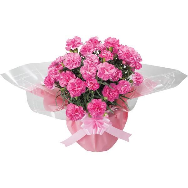 【送料無料】【母の日】ピンクカーネーション鉢植えと感謝バウムクーヘンのセット【代引不可】【ギフト館】