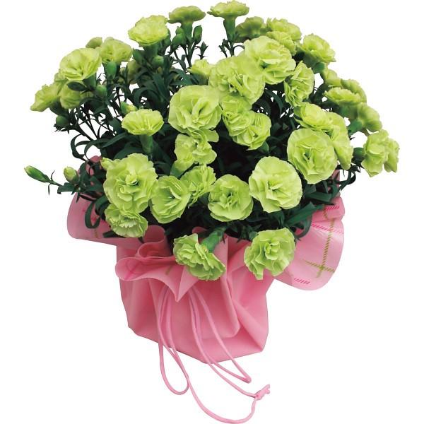 【送料無料】【母の日】グリーンカーネーション鉢植え スフェン【代引不可】【ギフト館】