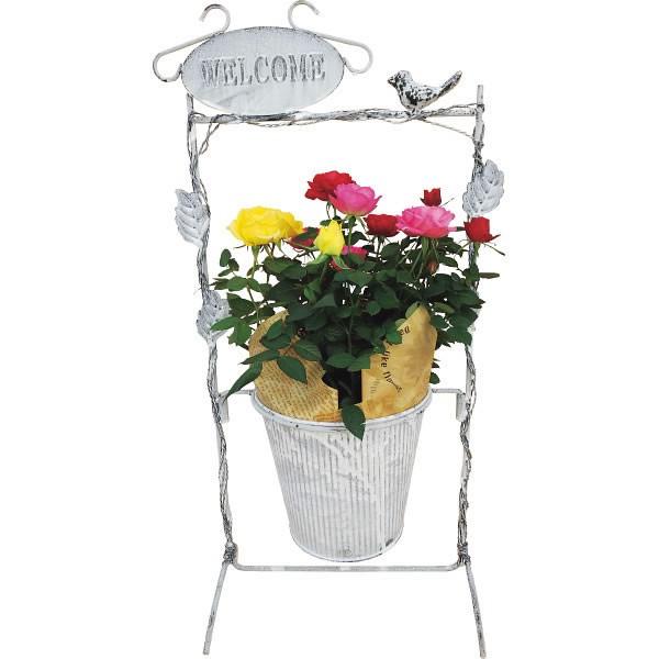 【送料無料】【母の日】バラ「ガーデンフレーム」【代引不可】【ギフト館】