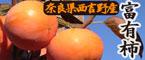 上田さんちの富有柿