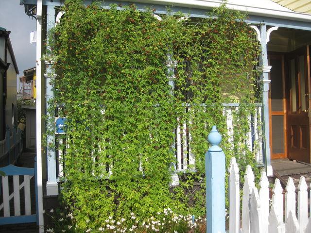 夏の暑さ対策グッズ5−ツル性植物で緑のカーテンを作ろう