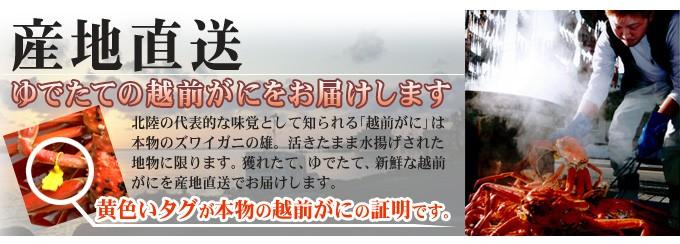 田島魚問屋の越前ガニは産地直送!黄色いタグが本物の越前ガニの証明です