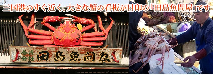 田島魚問屋の越前ガニは産地直送!