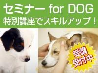 セミナー for DOG