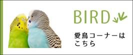 愛鳥コーナー