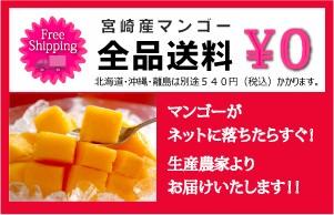 宮崎産マンゴー 送料無料