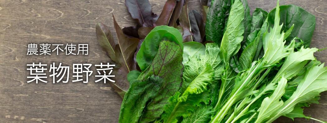 農薬不使用、葉物野菜