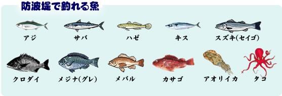 防波堤で釣れる魚