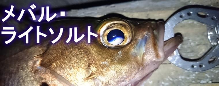 メバル・ライトソルト特集