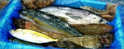鮮魚セット 生 活締め〆