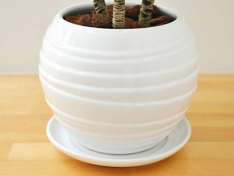 陶器鉢の拡大