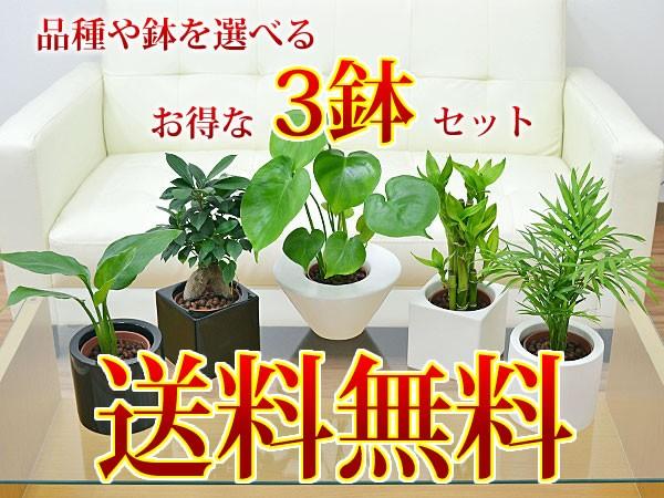 【送料無料】ミニ観葉植物 ハイドロカルチャースタイリッシュ陶器鉢付き 3鉢セット