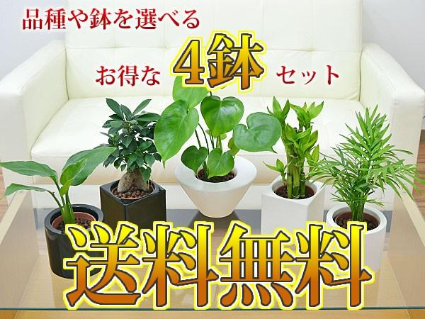 【送料無料】ミニ観葉植物 ハイドロカルチャースタイリッシュ陶器鉢付き 4鉢セット
