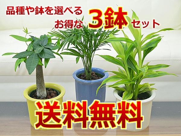 ミニ観葉植物ハイドロカルチャーパステル陶器全色