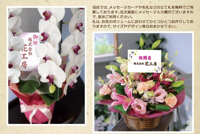 開店 開業祝い スタンド花 胡蝶蘭 アレンジメント