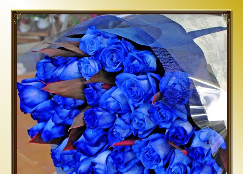 青いバラ(ばら、薔薇)ブルーローズ/BlueRose