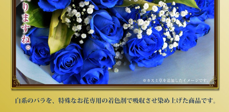 白系のバラ(ばら、薔薇)を特殊なお花専用の着色剤で吸収させ染め上げた商品です。
