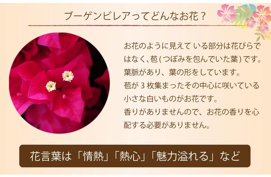 お花のように見えて いる部分は花びらではなく、苞(つぼみを包んでいた葉)です。