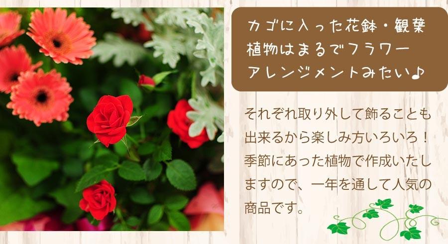 カゴに入った鉢花・観葉植物はまるでフラワーアレンジメントみたい♪それぞれ取り外して飾ることも出来るから楽しみ方いろいろ!季節にあった植物で作成いたしますので、一年を通して人気の商品です。