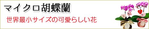 胡蝶蘭 マイクロ胡蝶蘭 取り扱い商品一覧ページへ