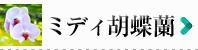 胡蝶蘭 ミディ