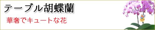 胡蝶蘭 テーブル胡蝶蘭 取り扱い商品一覧へ