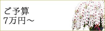 7万円以上の胡蝶蘭