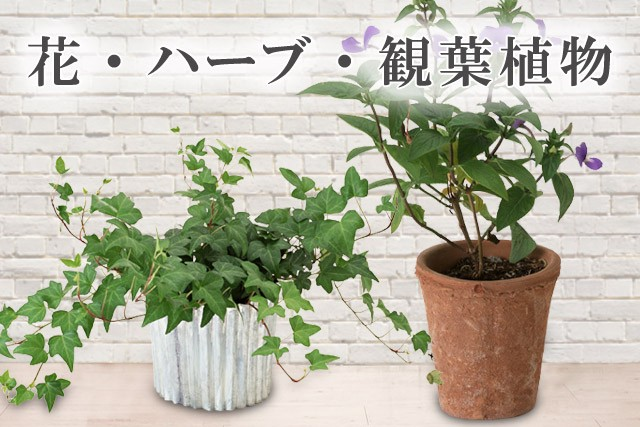 花・ハーブ・観葉植物