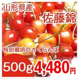 佐藤錦500