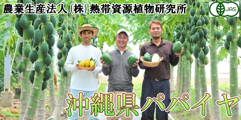 農業生産法人 株式会社 熱帯資源植物研究所