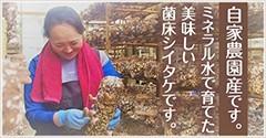 自家農園産です。ミネラル水で育てた美味しい菌床シイタケです。