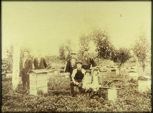 1925年(大正14年)頃の採蜜風景