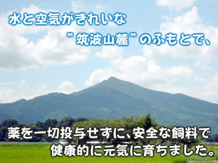 """水と空気がきれいな""""筑波山麓""""のふもとで、薬を一切投与せずに、安全な飼料で健康的に元気に育ちました。"""
