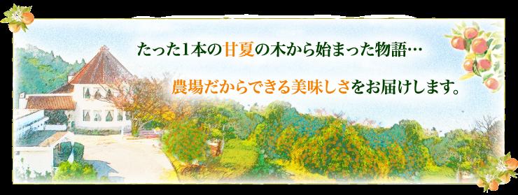 1本のみかんの木から始まった福田農場