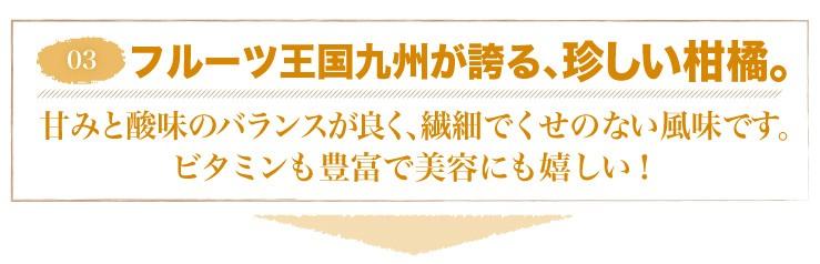 03 フルーツ王国九州が誇る、珍しい柑橘。