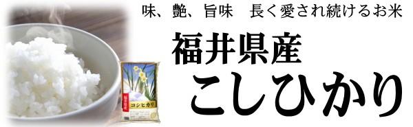 福井コシヒカリ