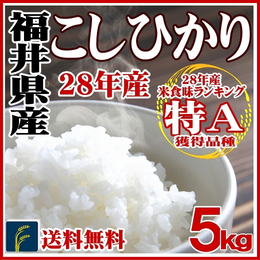 福井コシ5k