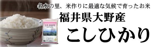 大野コシヒカリ