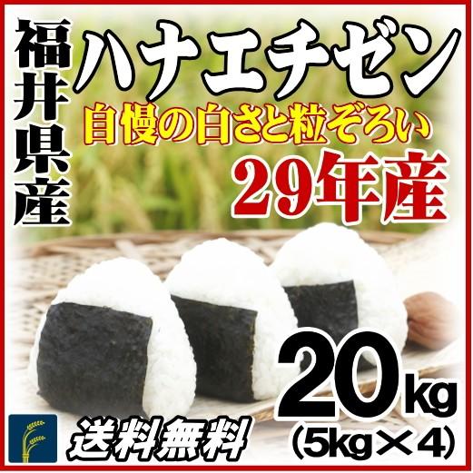 福井ハナ20kg