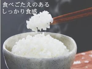 福井ハナエチゼン