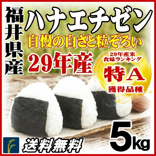 福井ハナエチゼン5kg